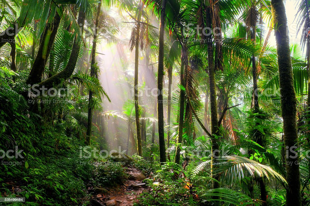 El Yunque morning mist stock photo