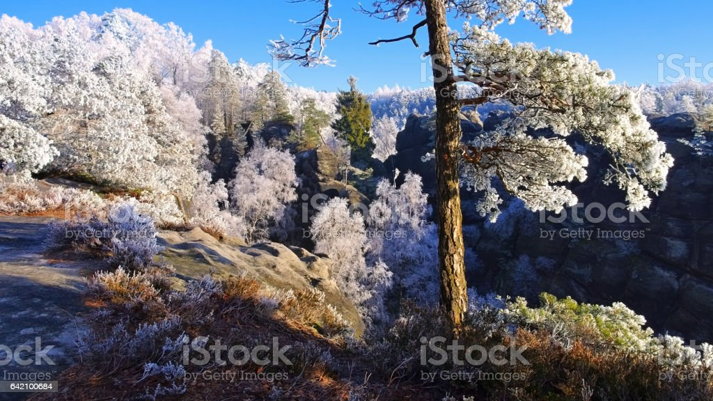 Elbe sandstone mountains in winter and hoarfrost stock photo