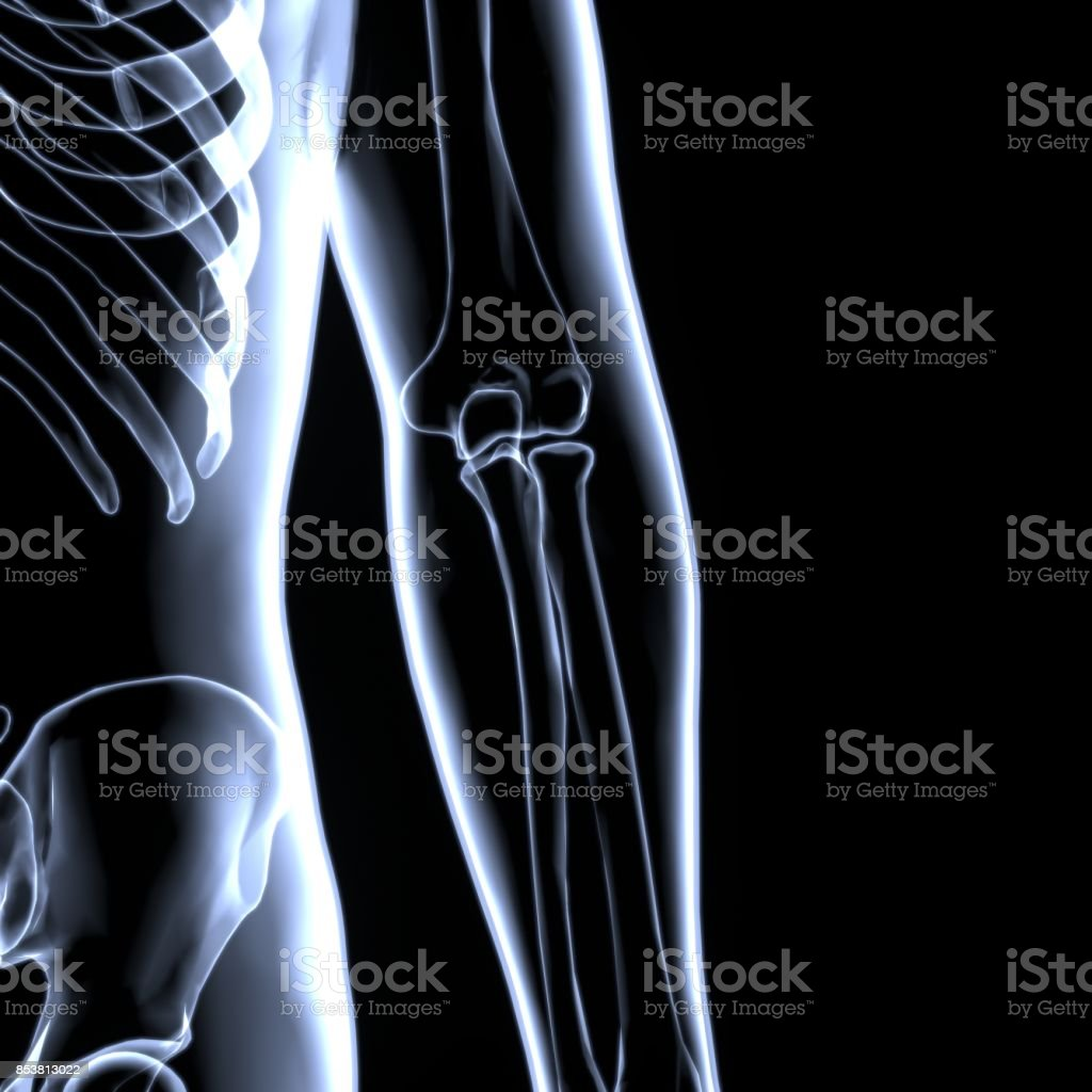 Elbow Joint Anatomy - Detailed with Circulatory highlighted zone - pain concept stock photo