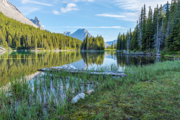 Elbow Lake in Elbow Pass at Peter Lougheed Provincial Park Elbow Lake in Elbow Pass in Kananaskis Alberta Canada kananaskis country stock pictures, royalty-free photos & images