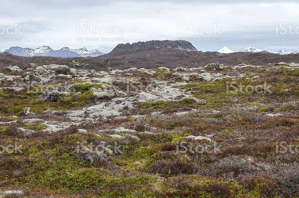 Eldborgarhraun lava field in Iceland stock photo