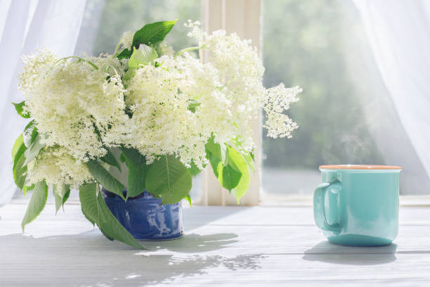 holunderblüten und tasse heißen kaffee durch das sonnenlicht-fenster - weißer holunder stock-fotos und bilder