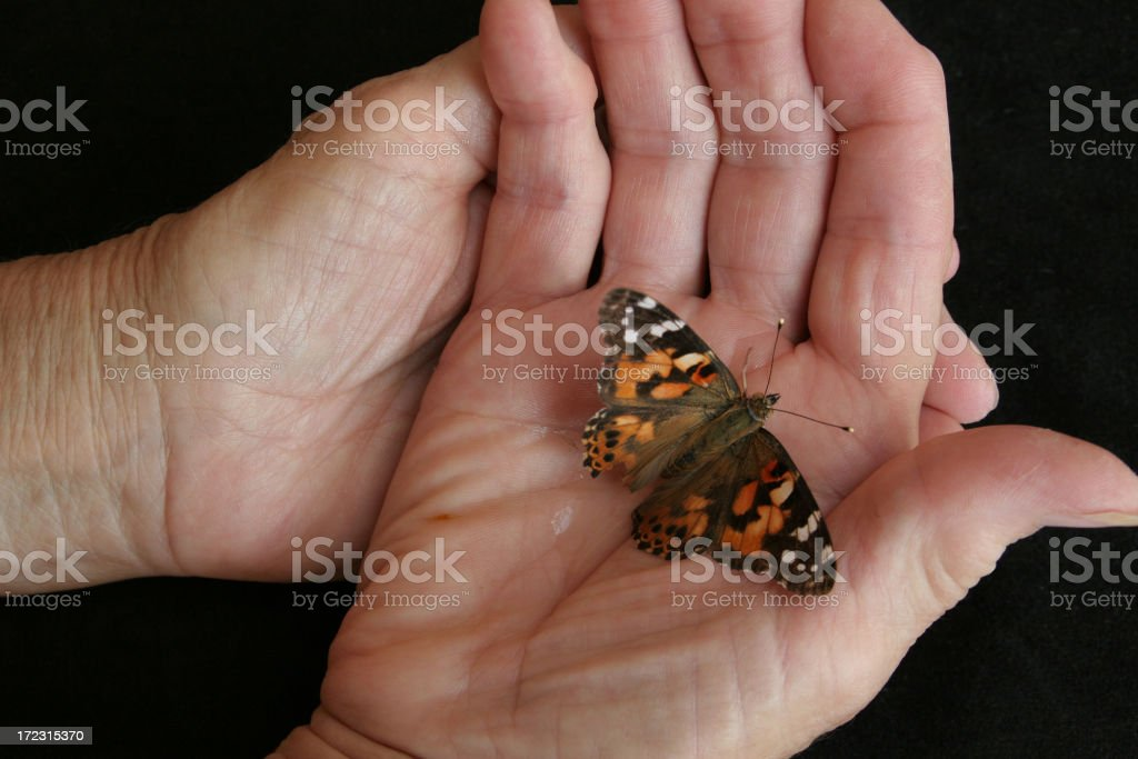 Elder Hands Holding Butterfly stock photo