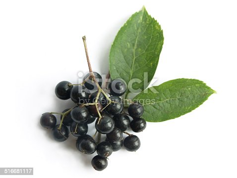 The fruits of black elderberry are used in traditional medicine to treat bronchitis, cough, infections, fever.