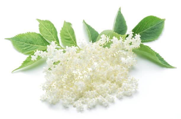 holunder-blüten auf dem weißen hintergrund. - holunderlikör stock-fotos und bilder