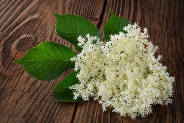 holunder-blüten auf dem hölzernen hintergrund. heilenden eigenschaften des holunder blüten. - holunderlikör stock-fotos und bilder