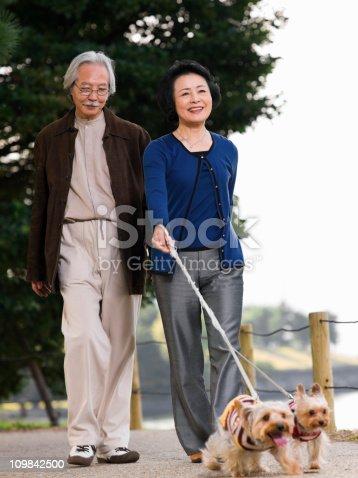 874818944 istock photo Elderly Couple Walking Their Dogs 109842500