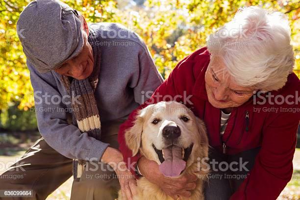 Elderly couple with their pet dog picture id636099664?b=1&k=6&m=636099664&s=612x612&h=qwyo fdoblr2mgufbedwuzt7mvgwp5qyu9flbhyf3xm=