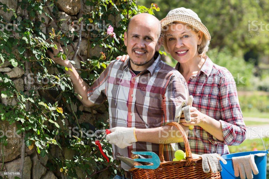 Elderly couple working in the garden stock photo