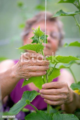 🔥 Elderly Farmer Woman Holding Tying Up Seedlings Plants In