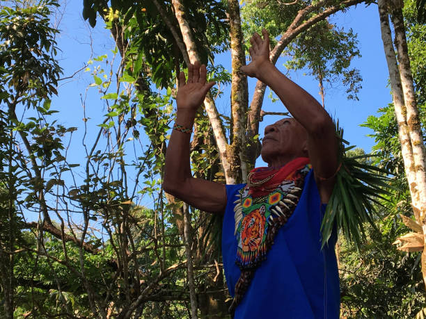 Elderly indigenous shaman of Cofan nationality performing a healing ritual with his arms raised in the Amazon rainforest Nueva Loja, Sucumbios / Ecuador - September 2 2020: Elderly indigenous shaman of Cofan nationality performing a healing ritual with his arms raised in the Amazon rainforest alejomiranda stock pictures, royalty-free photos & images
