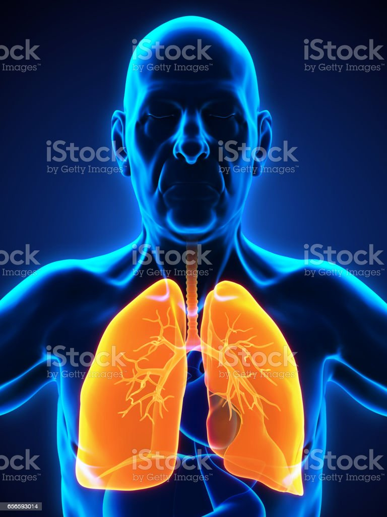Elderly Male Respiratory System stock photo