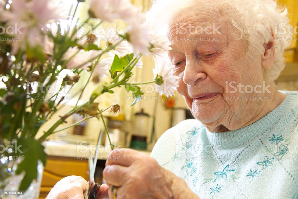 Elderly woman arranges  a vase of flowers stock photo