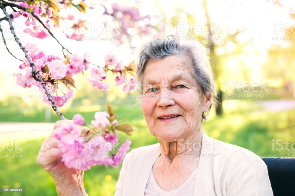 Elderly woman in wheelchair in spring nature. stock photo