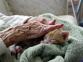istock Elderly woman receiving pet therapy by stroking a kitten 139394398