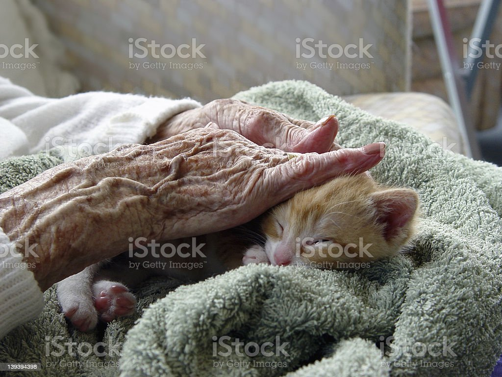 Elderly woman receiving pet therapy by stroking a kitten stock photo