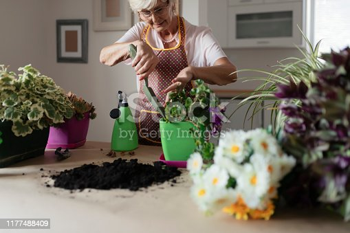 Senior Woman Caring for House Plant. Woman Taking Care of Plants at Her Home. Lovely Senior Housewife With Flower in Pot and Gardening Set Indoors. Portrait of Elderly Woman Gardening at Home. Retired Female Care for Her Plants.