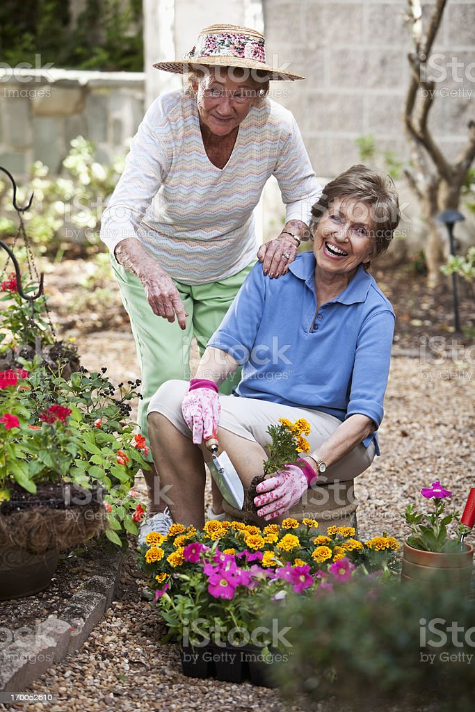 Elderly women gardening royalty-free stock photo