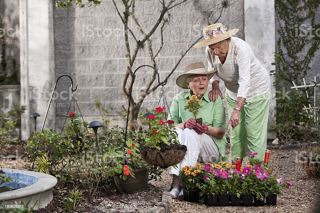 Elderly women gardening stock photo