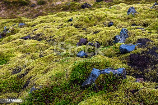Eldhraun lava field, flow and ridge covered with green moss in Iceland