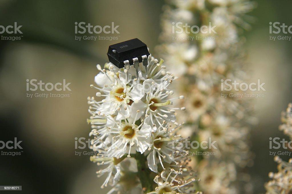 elecronic meets nature stock photo