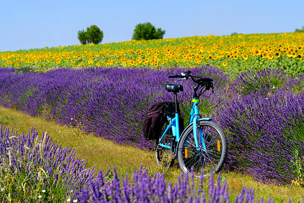 Electric bicycle in the lavender field in Provence stock photo
