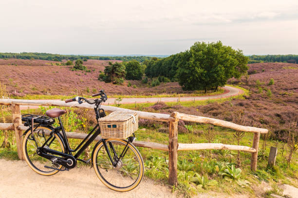 Electric bicycle with basket in Dutch national park The Veluwe stock photo
