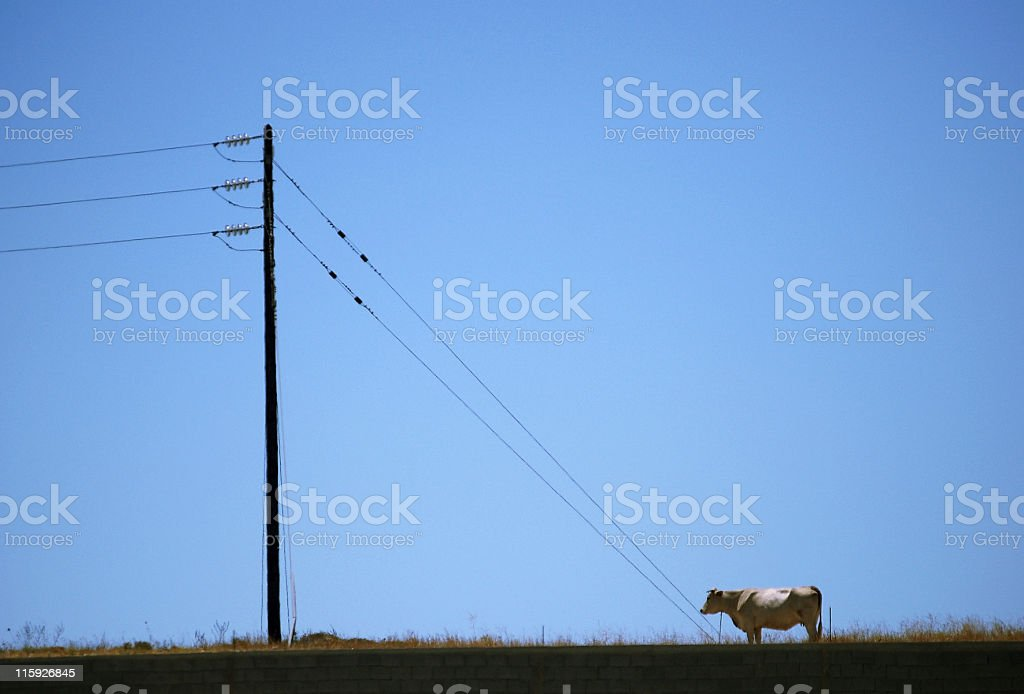 Electric cow royalty-free stock photo