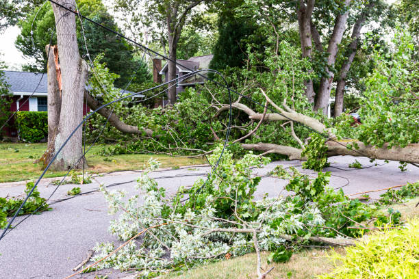 Electric wires torn down by a tree that fell during Tropical Storm Isaias Trees snapped in half knocking down electric and cable wires from Tropical Storm Isaias in Babylon Village Long Island New York. extreme weather stock pictures, royalty-free photos & images