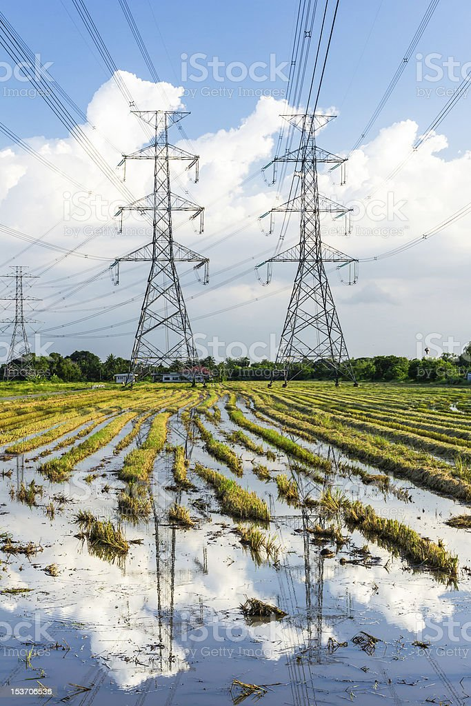 electricity high voltage power post in paddy field royalty-free stock photo