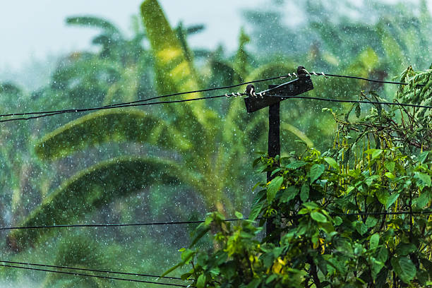 Electricity poles in the rain Electricity poles in the rain knocked down stock pictures, royalty-free photos & images