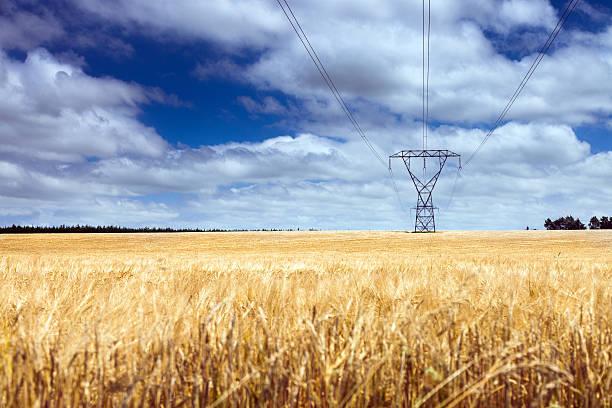 Electricity pylon läuft über Feld power – Foto
