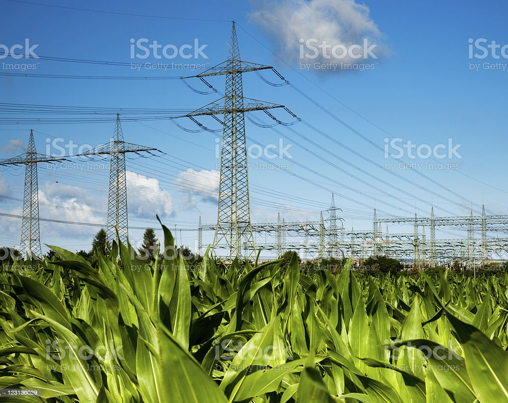 Electricity pylons on corn  field royalty-free stock photo