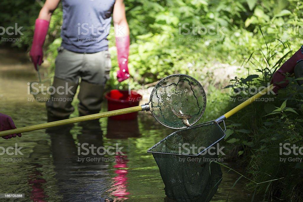 electrofishing stock photo