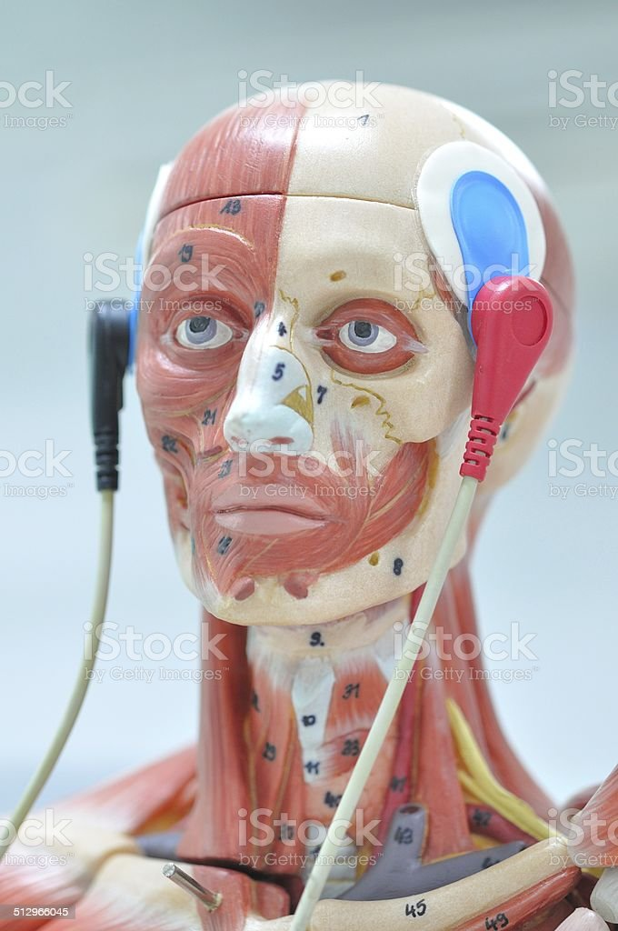 electromyography stock photo