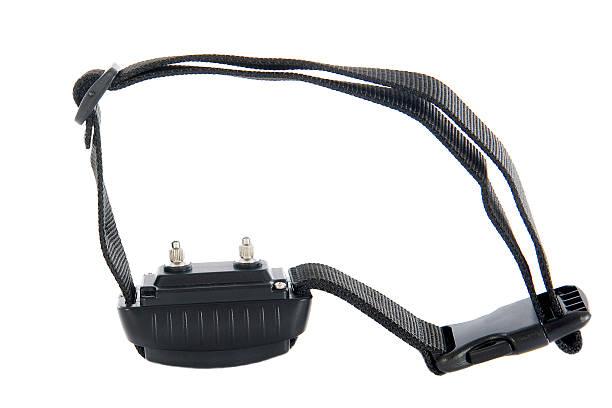 electronic collar - 衣領 個照片及圖片檔