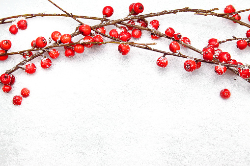 Elefanckie Christmas branches with red berries on snow