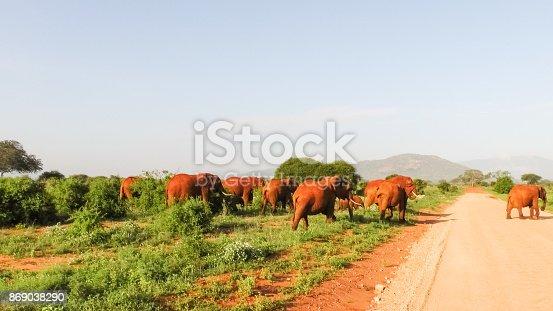 182061384 istock photo Elefanten 869038290
