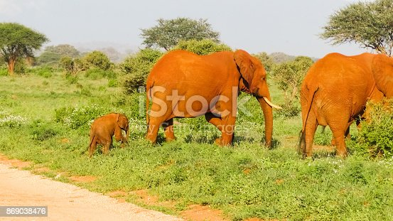 182061384 istock photo Elefanten 869038476