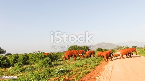 182061384 istock photo Elefanten 869038516
