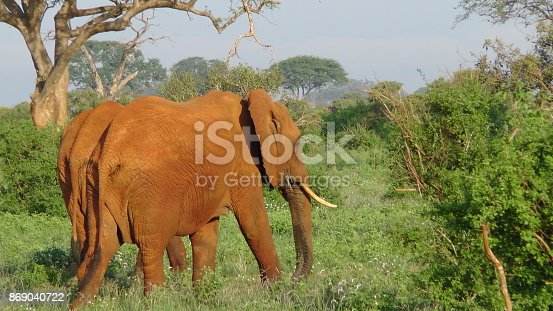 182061384 istock photo Elefanten 869040722