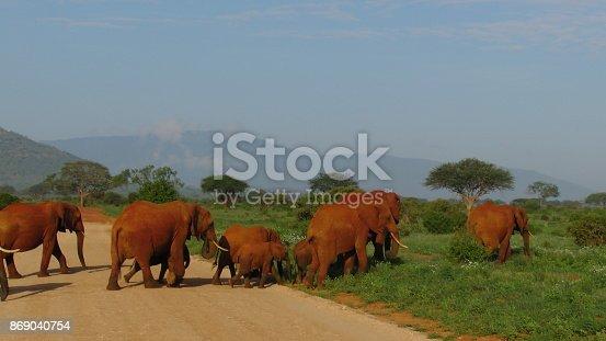 182061384 istock photo Elefanten 869040754