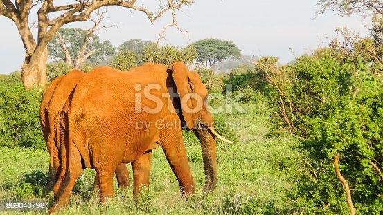 182061384 istock photo Elefanten 869040796