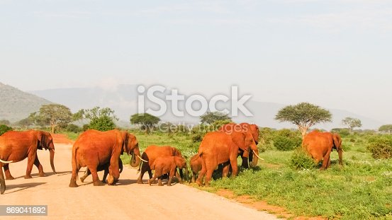 182061384 istock photo Elefanten 869041692