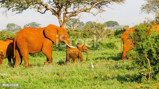 182061384 istock photo Elefanten 869042008