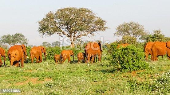 182061384 istock photo Elefanten 869044886