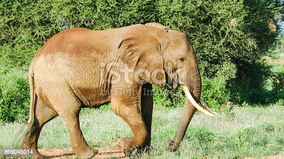 182061384 istock photo Elefanten 869045014