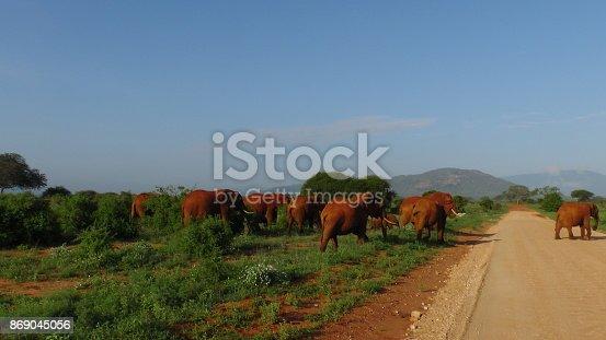 182061384 istock photo Elefanten 869045056