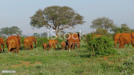 182061384 istock photo Elefanten 869045194