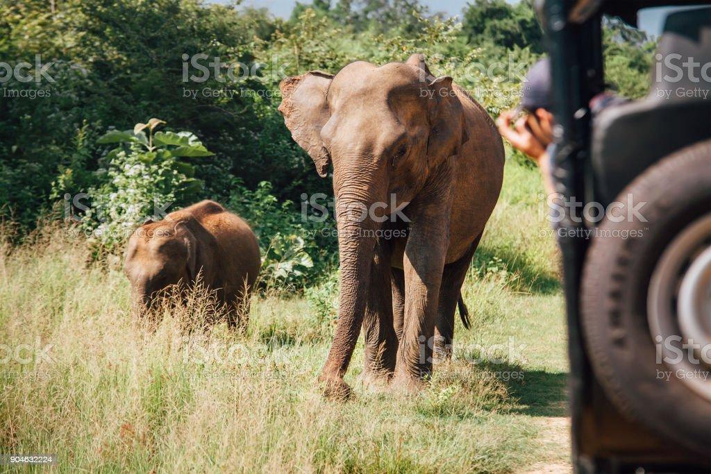 スリランカの国立自然公園 Udawalawe でサファリにやくじ ストックフォト